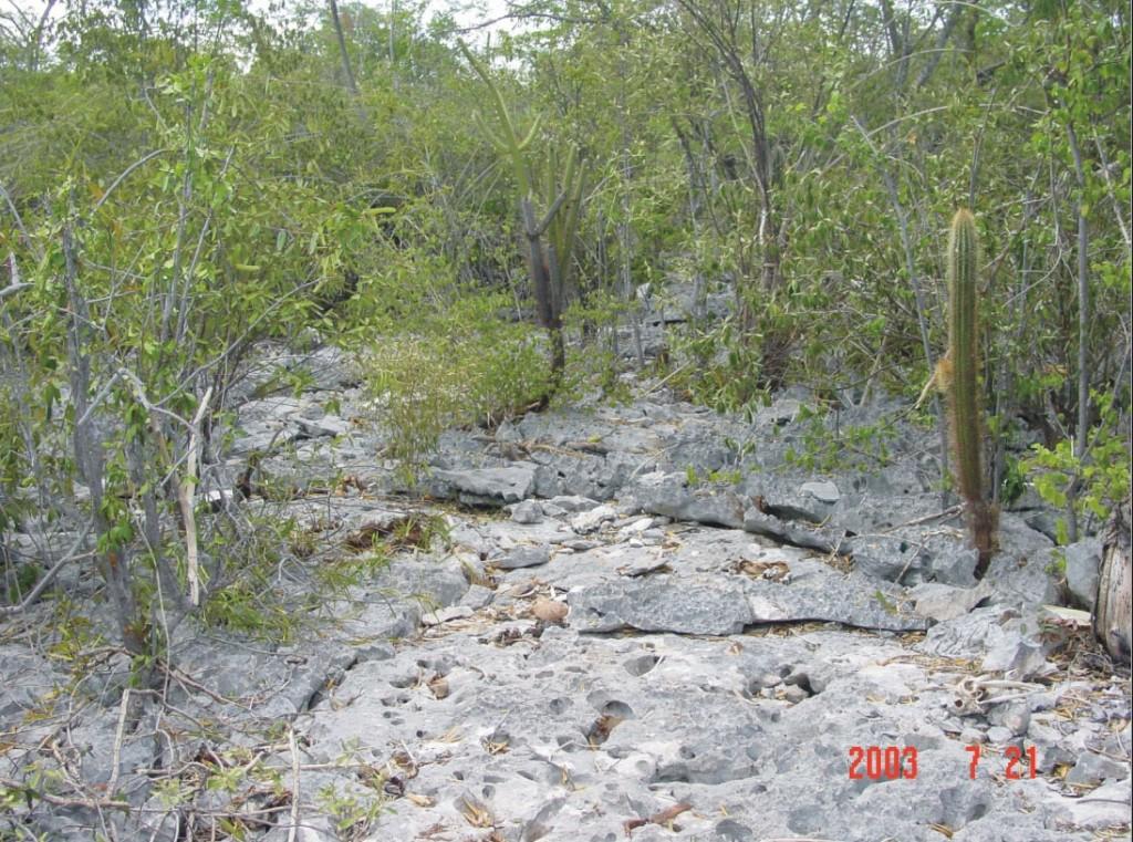 """Matorral xerófilo sobre  lapiaz (""""múcara"""" o """"diente de perro"""" en la terminología local), ecosistema predominante del Parque Nacional Jaragua (sobre todo en su borde occidental). Este tipo de micromodelado, desarrollado sobre calizas Miocenas, es propio de los sistemas kársticos de plataforma. Se ha evidenciado la altísima fragilidad de estos ambientes, atribuible a su escasa capacidad de regeneración por la escasez de nutrientes y agua higroscópica. ¿Y aquí iban a sembrar los parceleros? (Foto: J. Martínez, 2003)"""