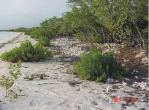 Playa prístina del litoral de Pedernales, con su vegetación natural. Foto: J. Martínez, 2003